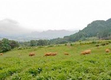 阿蘇の草原と持続的農業