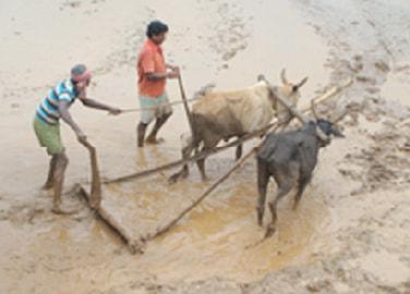 コラプット伝統農業