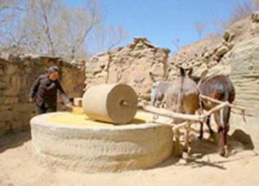アオハンの乾燥農業システム