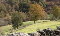 バローソの農業林間放牧システム