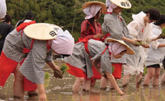 Otaue Festival