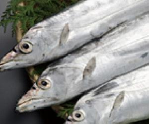 Cutlass fish