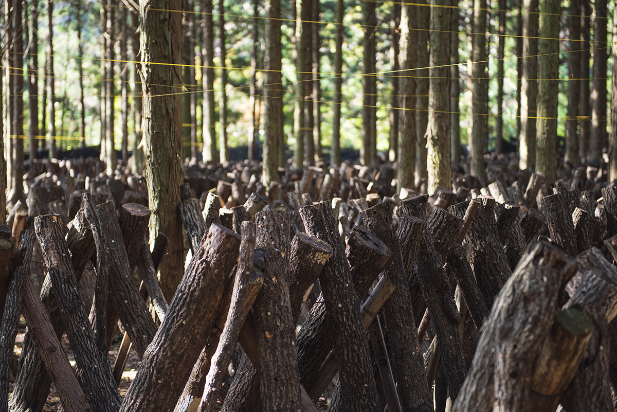 原木しいたけ生産体験