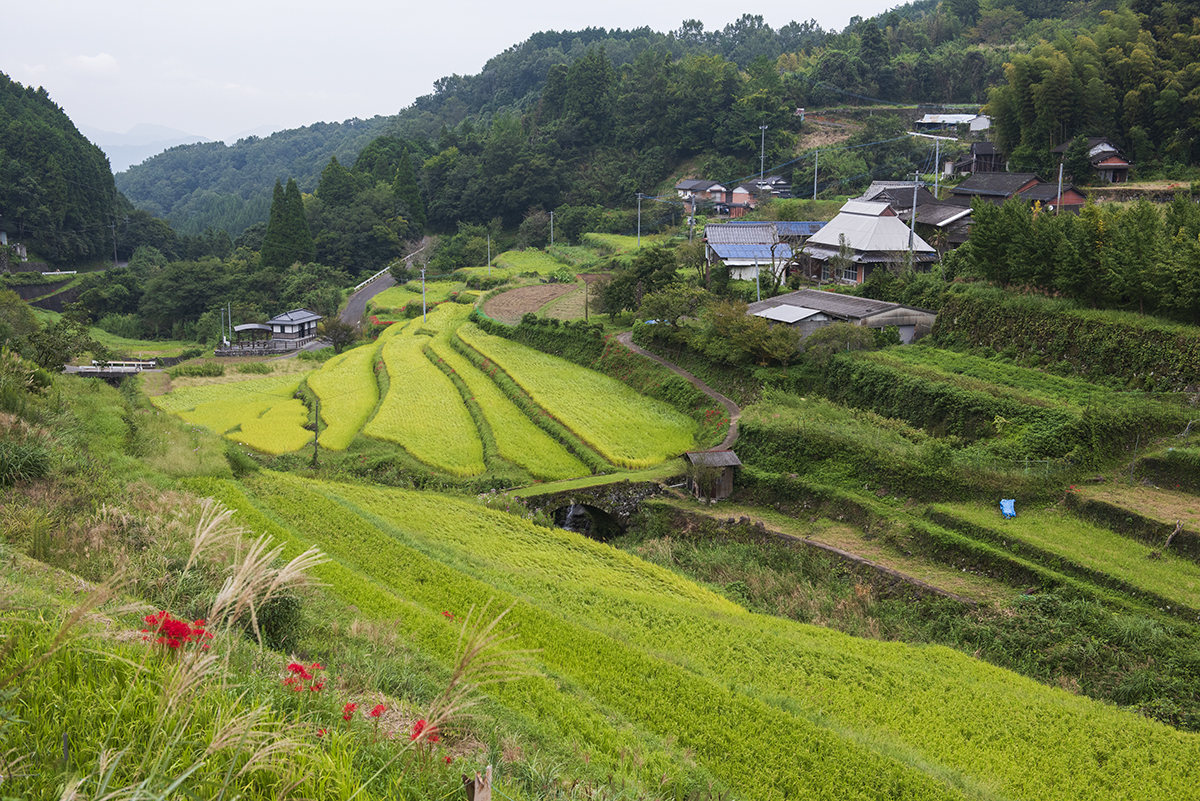 両合棚田 農業体験
