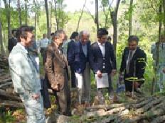 豊後高田市の広葉樹林のほだ場を現地調査