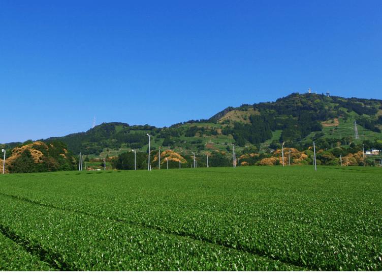 静岡の茶草場農法