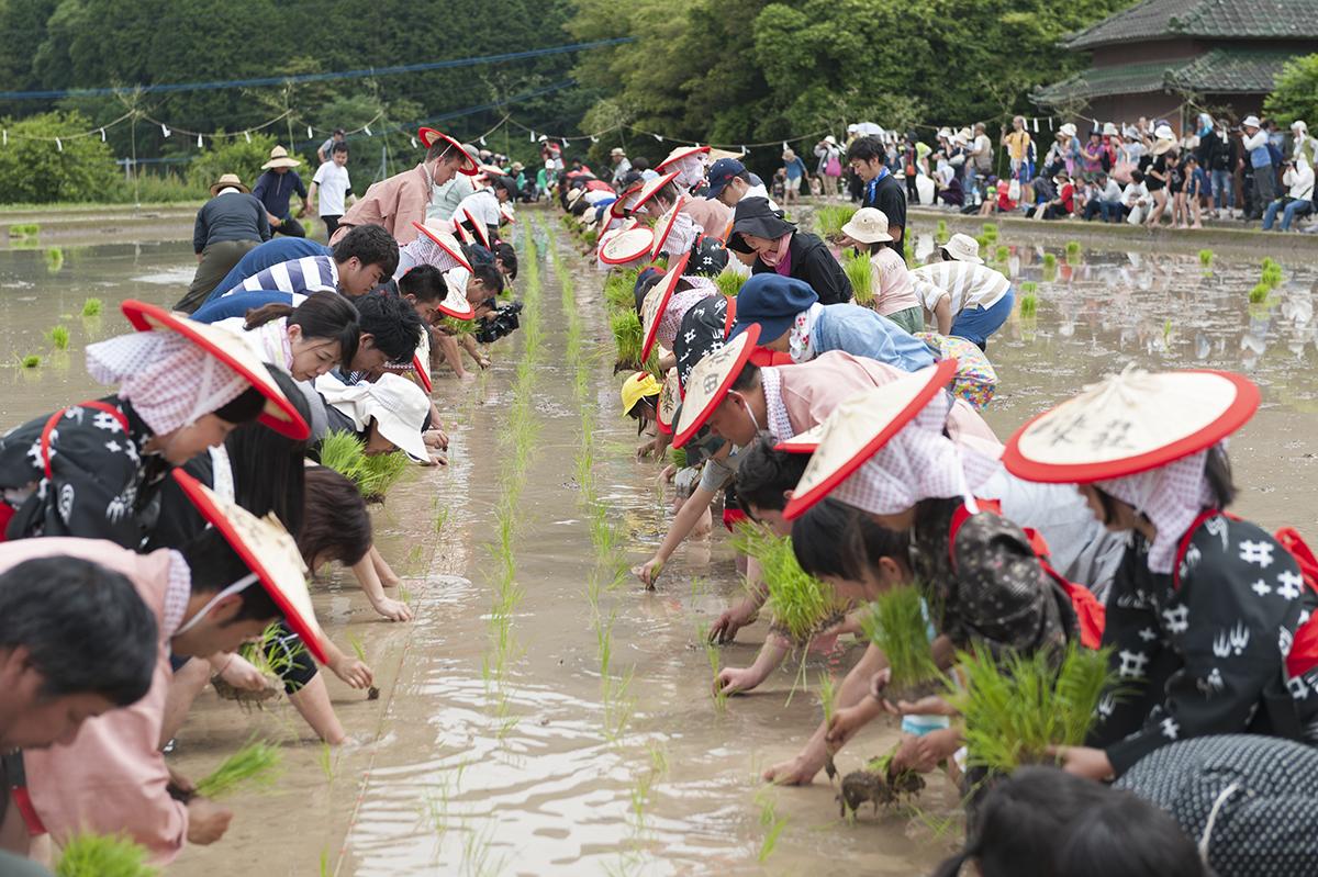 荘園の里 田植体験・収穫体験